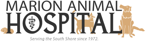 Marion Animal Hospital – Veterinarians on the South Shore logo